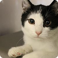 Adopt A Pet :: Lionel - Medina, OH