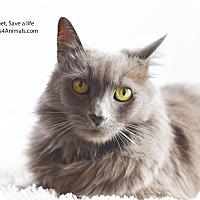 Adopt A Pet :: Sheba - Xenia, OH