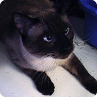 Adopt A Pet :: Prince - Kalamazoo, MI