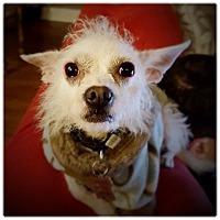 Adopt A Pet :: ABBY - Glendale, CA