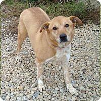 Adopt A Pet :: Rusty - Las Vegas, NV