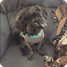 Adopt A Pet :: TOBY in Rhode Island
