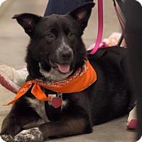 Adopt A Pet :: Hazel D3454 - Shakopee, MN