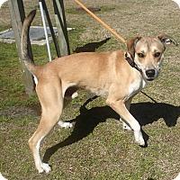 Adopt A Pet :: Wildley - Newport, NC