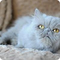 Adopt A Pet :: Layla - Columbus, OH