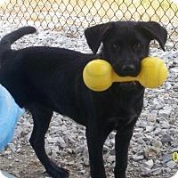 Adopt A Pet :: Emma - Brewster, NY