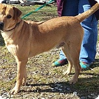 Adopt A Pet :: Lovo - Delaware, OH