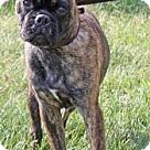 Adopt A Pet :: Jeremiah