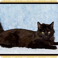 Adopt A Pet :: Lucy - Mt. Prospect, IL
