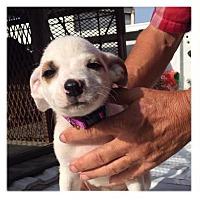 Adopt A Pet :: Princess in CT - East Hartford, CT