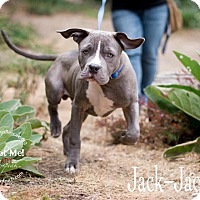 Adopt A Pet :: Jack Jack - San Francisco, CA
