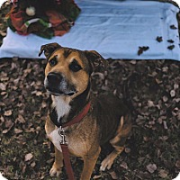 Adopt A Pet :: Wally - Gadsden, AL