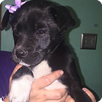 Adopt A Pet :: Karly - Rocky Mount, NC