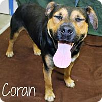 Adopt A Pet :: Coran - Melbourne, KY