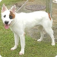 Adopt A Pet :: Theo - Newport, NC