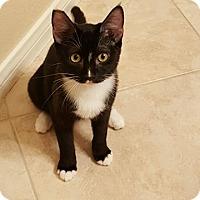 Adopt A Pet :: Sara - North Las Vegas, NV