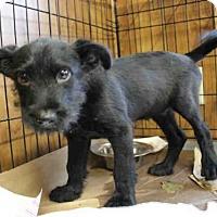Adopt A Pet :: LUCAS - Wainscott, NY