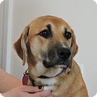Adopt A Pet :: Julia - Berkeley Heights, NJ