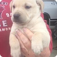 Adopt A Pet :: Drake (ADOPTION PENDING) - Burlington, VT