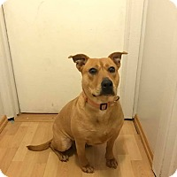 Adopt A Pet :: Hadley - New Milford, CT