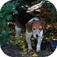 Adopt A Pet :: Greer - Novi, MI