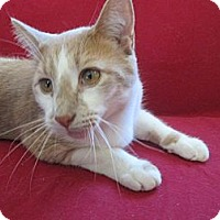 Adopt A Pet :: Peter - Richland, MI