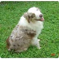 Adopt A Pet :: Rusty - Orlando, FL