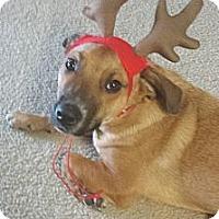 Adopt A Pet :: Kobe - Chicago, IL