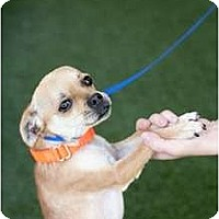 Adopt A Pet :: Marty - Mission Viejo, CA