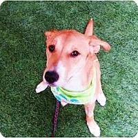 Adopt A Pet :: Bambi - Mission Viejo, CA