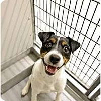 Adopt A Pet :: Jack in Montgomery - Houston, TX