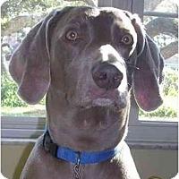 Adopt A Pet :: Choco  **ADOPTED** - Eustis, FL