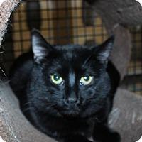 Adopt A Pet :: Viper - Hamilton, ON