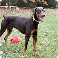 Adopt A Pet :: Rondo - Greensboro, NC