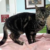 Adopt A Pet :: Emily Elisabeth - Putnam Hall, FL