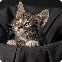 Adopt A Pet :: Placido - Chicago, IL