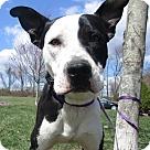 Adopt A Pet :: Travis