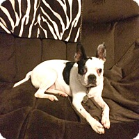 Adopt A Pet :: Hannah - Pollocksville, NC