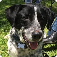 Adopt A Pet :: C.C. - Mandeville Canyon, CA