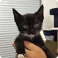 Adopt A Pet :: Rabbit - Los Angeles, CA