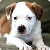 Adopt A Pet :: Yodel - Salt Lake City, UT