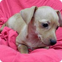 Adopt A Pet :: Whisky Mac - Fresno, CA