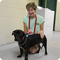 Adopt A Pet :: Checkers - Elyria, OH