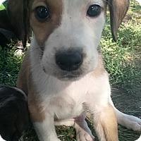 Adopt A Pet :: Divinci - Ogden, UT