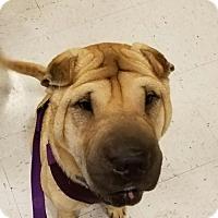 Adopt A Pet :: Peanut - Colorado Springs, CO