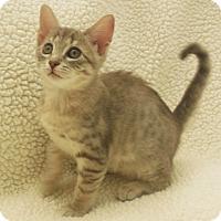 Adopt A Pet :: Stormy - Burgaw, NC