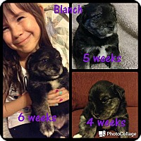 Adopt A Pet :: Blanche - St. Charles, MO