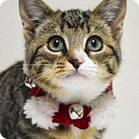 Adopt A Pet :: Gravy - Dublin, CA
