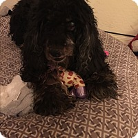 Adopt A Pet :: Moe - Scottsdale, AZ