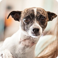 Adopt A Pet :: Tuesday - Dallas, TX